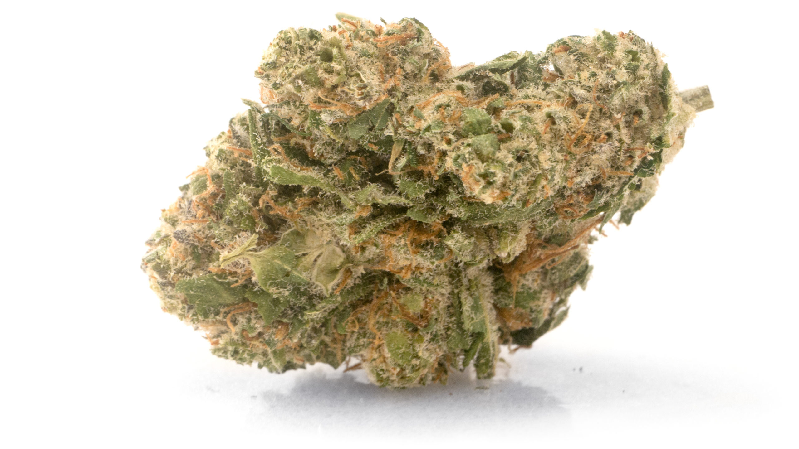 AltaVie North Star CBD bud AltaVie North Star CBD bud macro